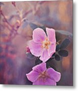 Prickly Rose Metal Print