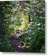 Priest Lake Trail Series IIi - Trail Shadows Metal Print