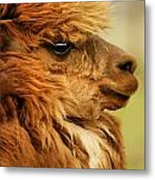 Profile Of A Camelid Metal Print