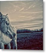 Profile Of A Horse Metal Print by Toni Hopper