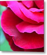 Profile Of A Rose Metal Print