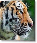 Profile Of A Siberian Tiger Metal Print