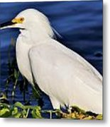 Profile Of A Snowy Egret Metal Print
