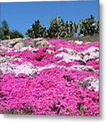 Profusion Of Pink Metal Print