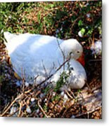 Protecting Her Eggs Metal Print