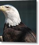 Proud Eagle Metal Print