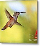 Proud Hummingbird Metal Print