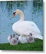 Proud Mother Swan Metal Print