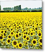 Provencial Sunflowers Metal Print