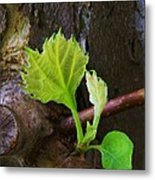 Pruning And New Growth Metal Print