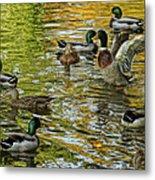 Ducks Unlimited 02 Metal Print