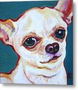 White Chihuahua - Puddy Metal Print