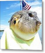 Puffer One Metal Print by Laurence Oliver