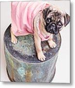 Pug Puppy Pink Sun Dress Metal Print