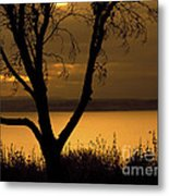 Pugent Sound Silhouetted Tree Metal Print