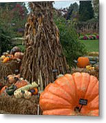 Pumpins And Gourds Metal Print