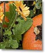 Pumpkin And Gerberas Metal Print