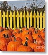 Pumpkin Corral Metal Print