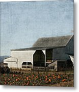 Pumpkin Farm Metal Print