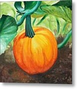 Pumpkin In The Garden Metal Print