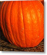 Largest Pumpkin Metal Print