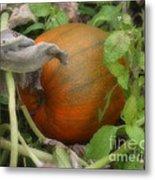 Pumpkin On The Vine Metal Print
