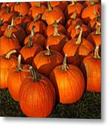 Pumpkin Pie Anyone Metal Print