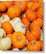 Pumpkin Squash Metal Print