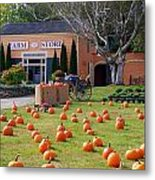 Pumpkins Everywhere Metal Print