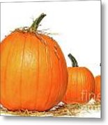 Pumpkins With Straw On White  Metal Print