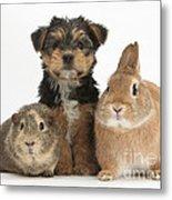 Pup, Guinea Pig And Rabbit Metal Print