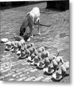 Puppies Metal Print by Fox Photos