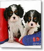 Puppies With Rain Boats Metal Print