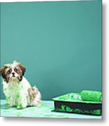 Puppy Covered In Green Paint From Paint Tray Metal Print