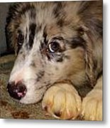 Puppy Face Metal Print