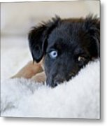 Puppy Lying On Soft Blanket Metal Print by Angela Auclair