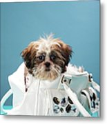 Puppy Sitting In Handbag Metal Print