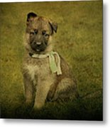 Puppy Sitting Metal Print