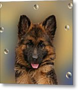 Puppy With Bubbles Metal Print