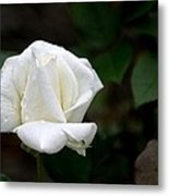 Pure As Snow Metal Print
