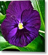 Pure Purple Metal Print