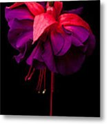 Purple And Pink Beauty Metal Print