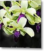 Purple And White Orchid Accent Fx  Metal Print