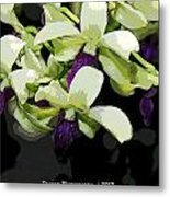 Purple And White Orchid Fx  Metal Print