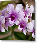 Purple And White Orchids Metal Print