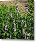 Purple And White Pinwheels Metal Print