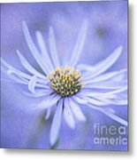 Purple Aster Flower Metal Print