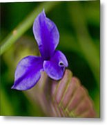 Purple Bromeliad Flower Metal Print
