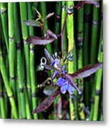 Blue Bursts From Bamboo Metal Print