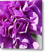 Purple Carnation Metal Print